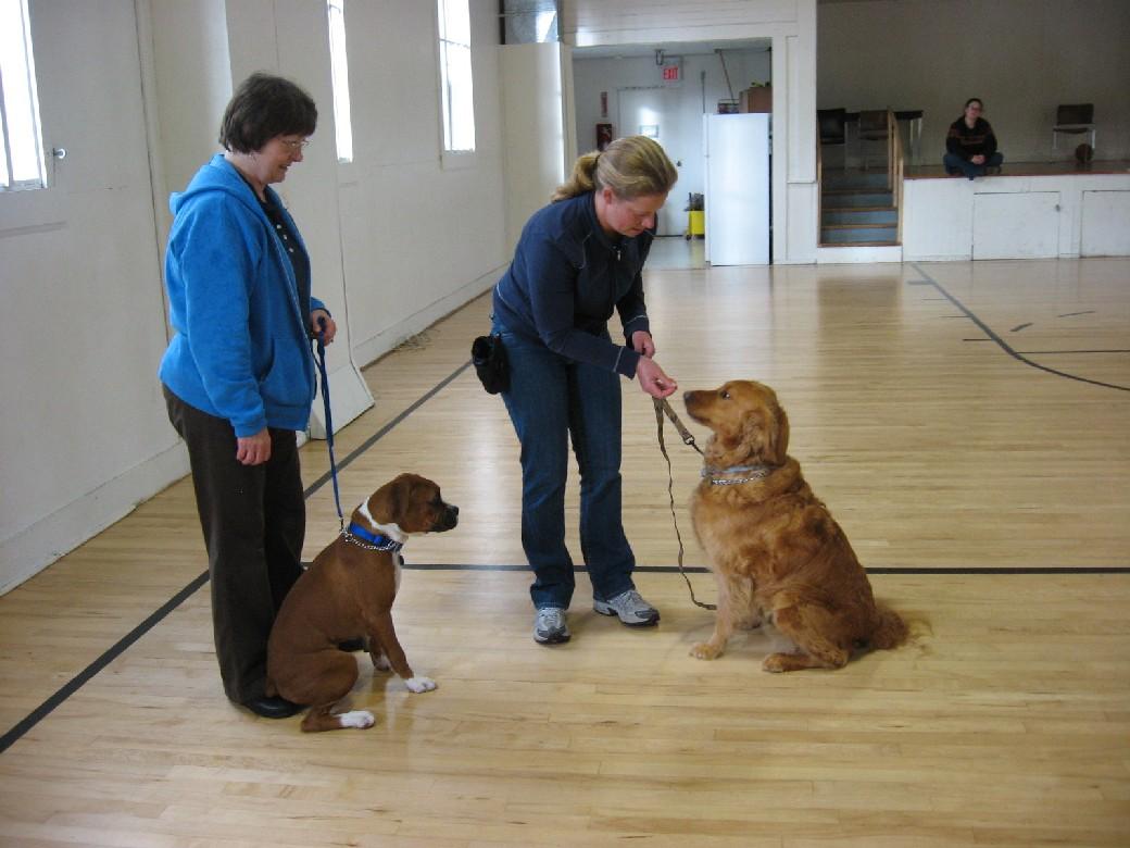 Socializing Dog Training Classes Potrland Oregon