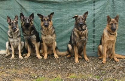 Obedience Training Dog Obedience Boarding School In Portland